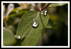 Waterdroplets (Xanis_WFN) Tags: macro waterdrops pentaxkx pentaxsmcpda35mmf28