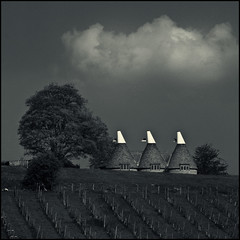 Going over the top (David (UK) - Gone) Tags: england cloud three kent vines bodiam peeping englishwine oasthouse chdk thatcloudisalmostperfectlysymmetricalandlookslikesantasmoustache