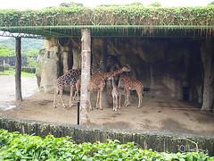 20110602酷節能體驗營 (26) (fifi_chiang) Tags: zoo taiwan olympus taipei ep1 木柵動物園 17mm 環保局 酷節能體驗營