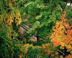 מסילת רכבת ועצים