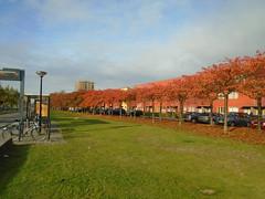 DSC00634 (Stichting Regenboogbuurt Almere) Tags: regenboogbuurt almerebuiten kleur architectuur bomen