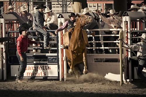 stampede2009_0108