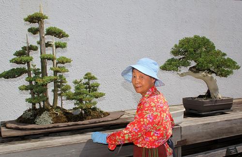 Bonsai care at the U.S. National Arboretum in Washington DC.