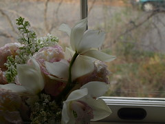Softly By The Window (virginiapoet) Tags: flowers flores window fleurs ventana flora soft finestra pastels inside bouquet fiore windowpane williamcarloswilliams softly floralbouquet flowersthroughthewindow