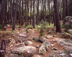 Forest, Corsica. (boal) Tags: france 120 mamiya film forest trekking mediumformat walking rocks ombre 6x7 slides paysage portra 2009 fort 65mm moyenformat 7ii epsonv700