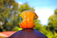 Core Memory (JD Hancock) Tags: trees sky apple clouds photo image head bald picture cc btp nogeo jdhancock