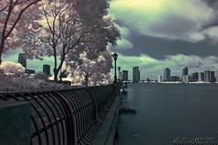 DSC4051 (Mypoorbrain) Tags: new trees usa ny newyork geotagged ir nj jersey infrared tribeca hudson estadosunidos r72 geo:lat=4071845167 geo:lon=7401489000