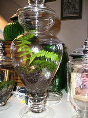 Medium Terrarium (velvetmarmoset) Tags: wedding fern green glass woodland moss rustic pebbles jar apothecary centerpiece terrarium glassrock
