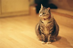 () Tags: film cat 50mm nikon expired  fujicolor c41 xtra800  f80s  datatw yardcafe