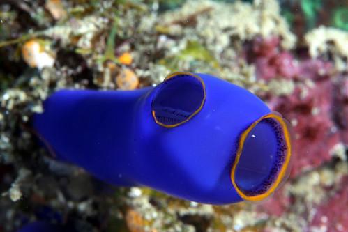 Tunicate I