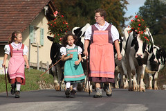 La dsalpe en Gruyre (Pierre Schwaller (lyoba.ch)) Tags: schweiz switzerland cows suisse fribourg tradition vache vaches gruyere gruyre paysan piller troupeau coutume dsalpe desalpe agriculteur lyoba pierreschwaller