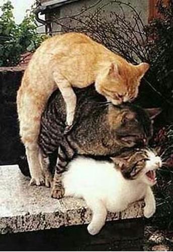 Partouze animale (11) par vous