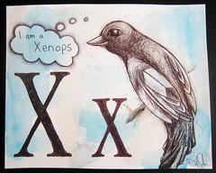 XxisforXenopslores