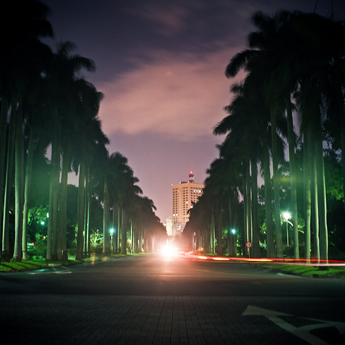 椰林大道 - Royal Palm Boulevard.
