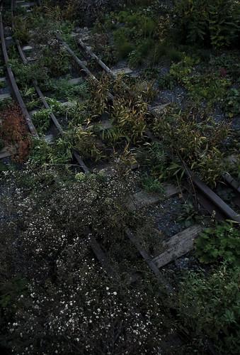 Highline Line
