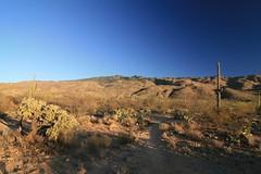 IMG_9722 (simon_travelboy) Tags: arizona tucson saguaronationalpark