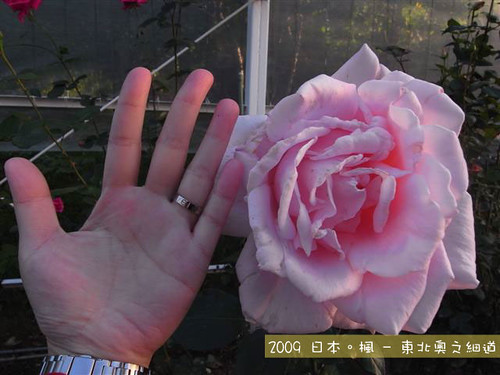 R1070520S(Small)