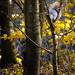 T.P. Squirrel  - T.P. Woods