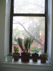 IMG_4264 (flaschenpostpics) Tags: nyc myfirstapartment manhattanapartment apartmenttherapyny uppereastsidestudio