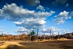 Encrucijada (Erika Gutierrez Fotografia) Tags: california travel panorama leaves landscape vineyard wine hills winery vineyards grapes bajacalifornia ensenada baja merlot grape vigne cabernet viñedos vigna valledeguadalupe cabernetsauvingnon rutadelvino viñadeliceaga