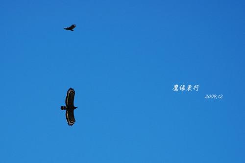台東行穿山甲20091126-07