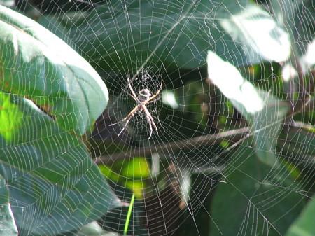 Spider and web beside road near Luna Azul
