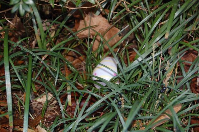 Easter Egg?