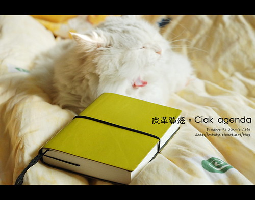 cat and my new agenda