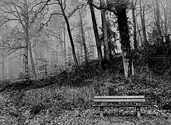Summer kisses, winter tears (heinrich_511) Tags: summerkisseswintertears song elvispresley forest meulenwald rhinelandpalatinate germany bench winter love tears mist tree woods thoughts nikond750 2485mm