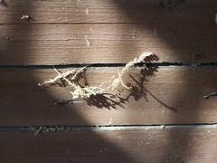 Still life (aliasblond) Tags: life wood light flower nature composition still ray open shot board air dry natura fiori aria legno aperta asse morta composizione secco oasi bando assi raggio secca argentra