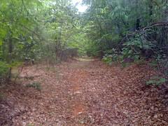 3 - Trail