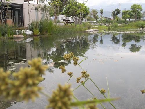 你拍攝的 37生態池。