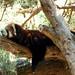 Woodland Park Zoo Seattle 002
