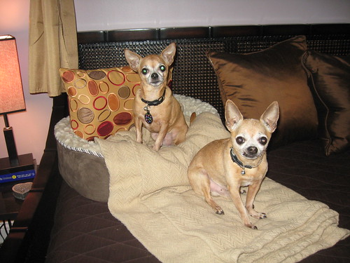 Peaches & Paco - there really are 2 of them!!