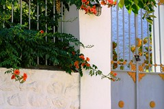 Gate and bougainvillea (Marite2007) Tags: architecture facade season islands spring intense gate colorful iron day vibrant decoration entrance vivid ornament housing mansion hydra entry dwelling saronian