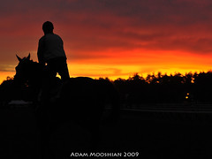 Good morning from the Spa (gutsygelding) Tags: horse silhouette race sunrise saratoga racing rider wickedpissahcolors