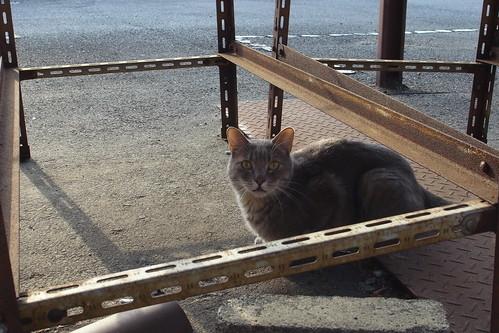 Today's Cat@20090903