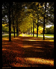 Happy Sunday ! (sediama (break)) Tags: sun leaves germany laub hannover explore sonne georgengarten summerending sediama imgp8128 bysediamaallrightsreserved