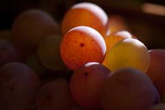 Fall Grapes (Doug_Hackett) Tags: green sunshine purple vine grapes bunch sunshinecoast