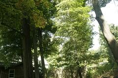 _MG_6440.JPG (zimbablade) Tags: trees sleepyhollow dougmiller videopoem