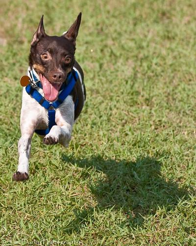 Dog Park 8-30-09-153
