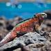 Galapagos Islands-133