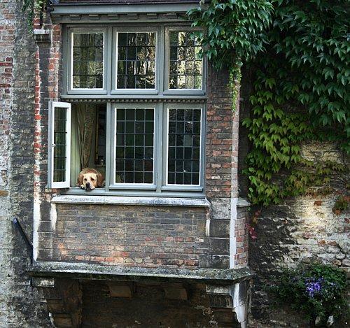 Brugge Dog
