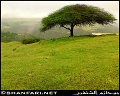 Darbat, Dhofar (Shanfari.net) Tags: flowers plants nature al natural ericsson sony greenery cave oman salalah  sultanate dhofar  khareef  haq  diplopoda     taqah    governate  madeinat  darbat taiq c905  raythut