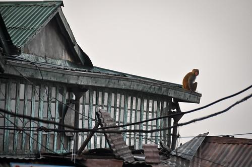 Shimla rooftop