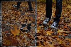 Converse advertisement (wendyyy) Tags: park autumn leaf maple shoes converse earl 2009 chucks rowe