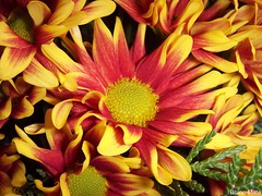 Flower (BrunoMM) Tags: red orange flower color verde green nature natural laranja flor vermelho cor