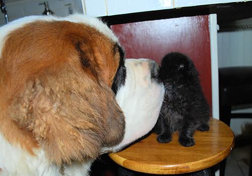 Winnie and Einstein