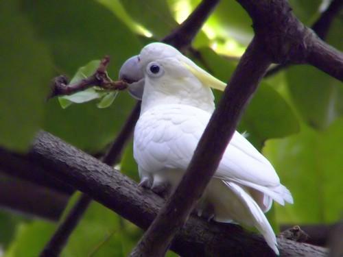 Enjoying Bird Watching in Hong Kong Park