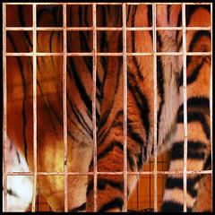 La cage aux fauves (Flohh) Tags: orange color texture canon square lumière couleurs montpellier contraste abstraction grille richter cirque tigre couleur lignes forme ligne carré coloré urbain abstrait fauve absctract graphique exterieur nonfiguratif flohh canonixus970is lacageauxfauves